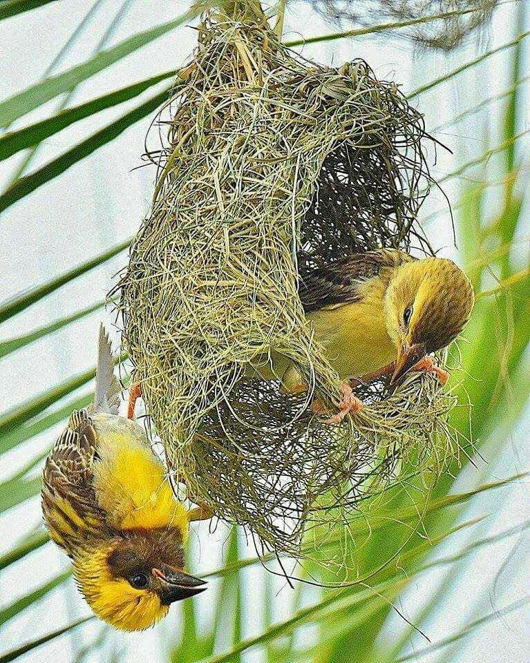 картинка птица вьет гнездо актер считает, что