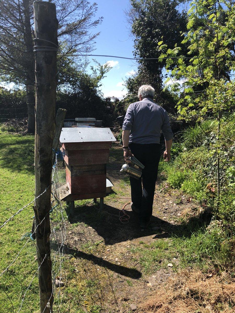 My father Dan getting ready to check on his bees #irishbeekeepers #beekeeping #honeybees