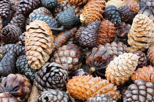 List25 On Twitter Use Pine Cones As Natural Mulch To Keep Dogs