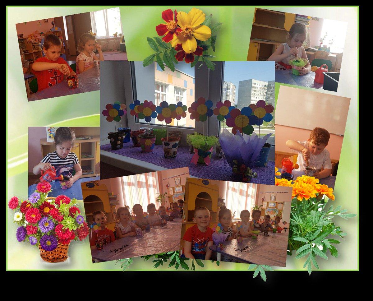 Цветы для клумб для детского сада