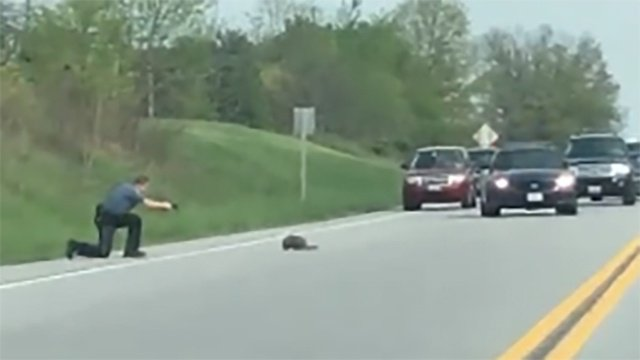 Deputy shoots groundhog blocking traffic in Carroll County https://t.co/zcrbqgwjcH