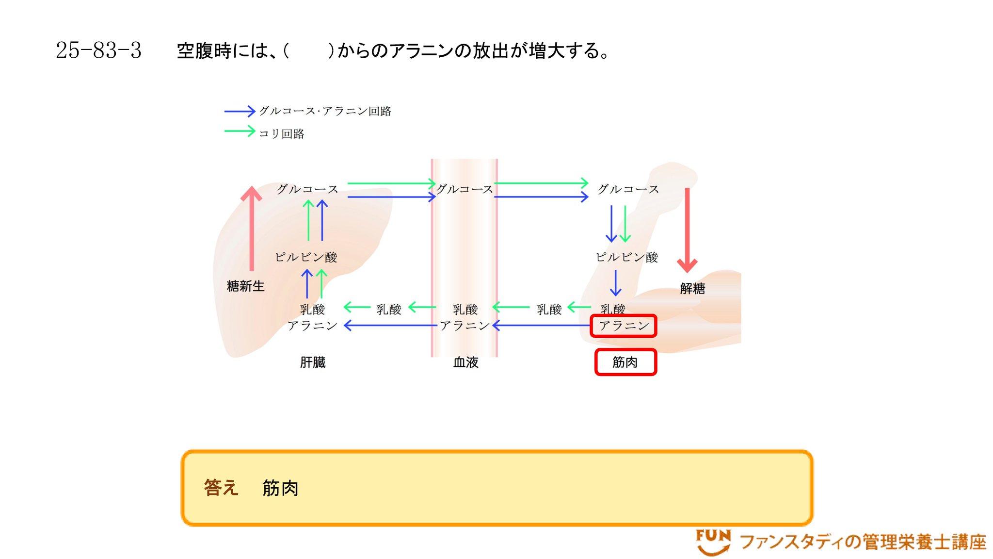 アラニン 回路 グルコース