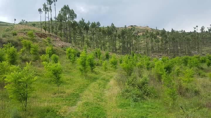 Billion Tree Tsunami KPK