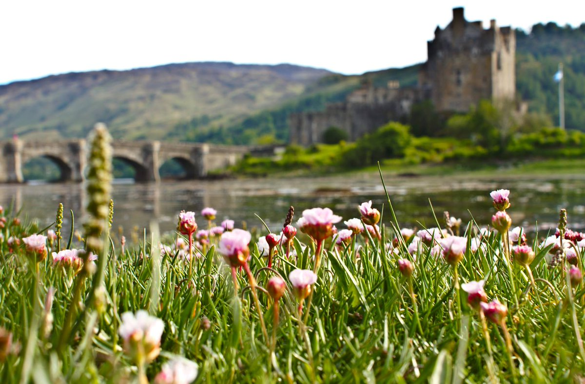 Eilean donan castle on twitter if you live near the coast i bet eilean donan castle on twitter if you live near the coast i bet you love sea pinks such happy wee resilient flowers mightylinksfo