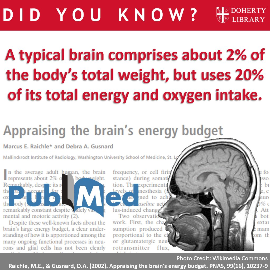 Dohertylibrary On Twitter Didyouknow How Much Energy Your Brain