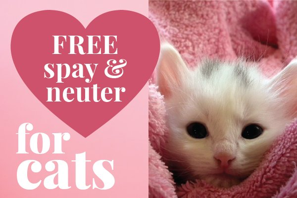Flyer Showing Cute Kitten Wred In Towel To Promote Free Spay Neuter Services For Los