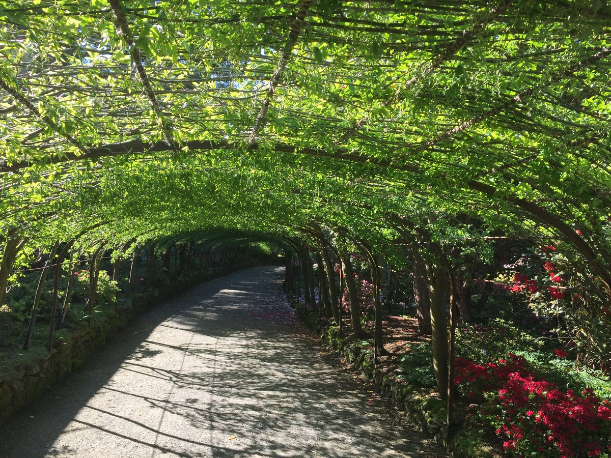 Bodnant Garden On Twitter A Dappled Shaded Walkway Of Lush Lime
