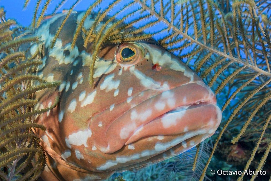 reefs - Twitter Search