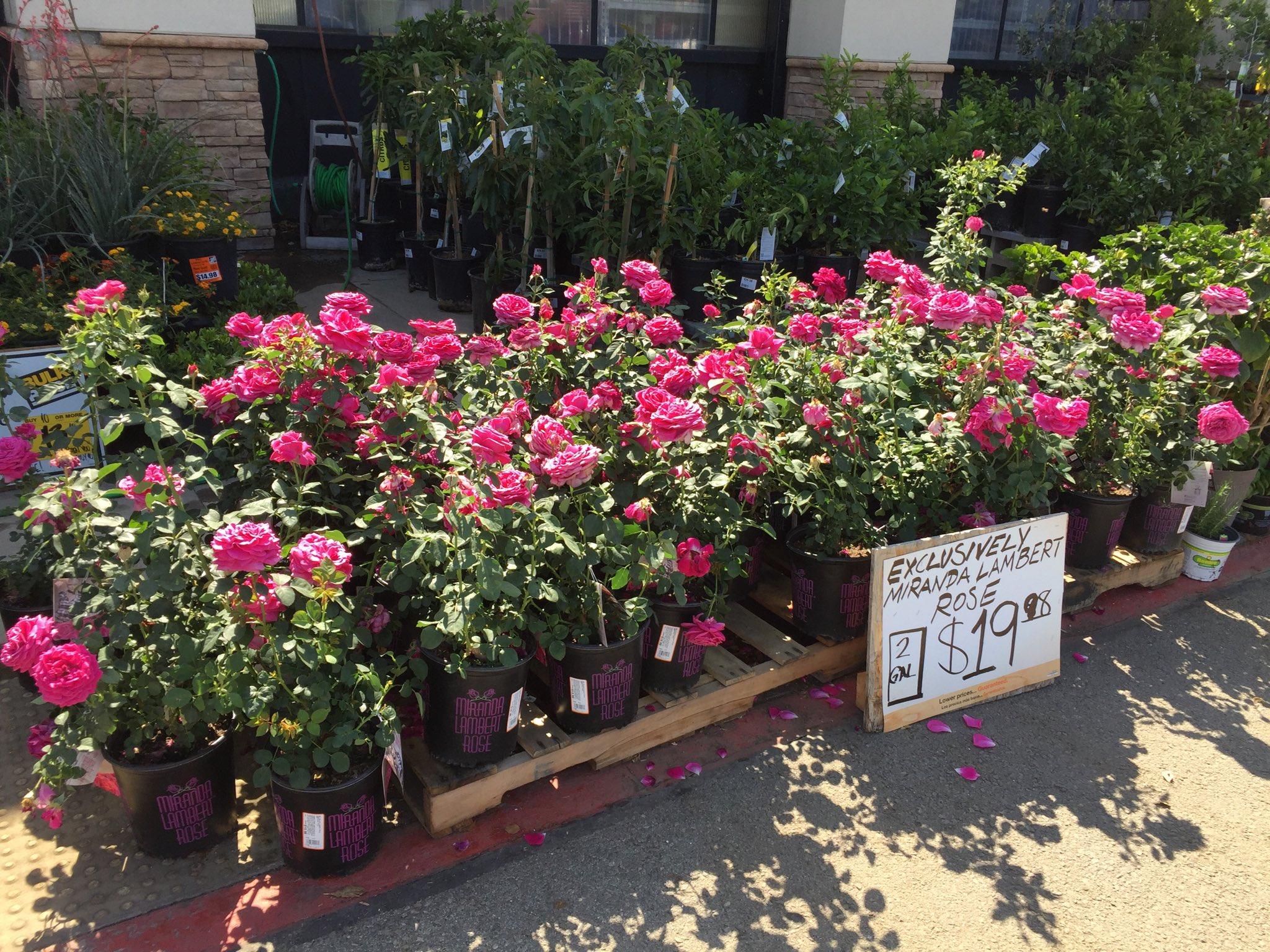 Miranda Lambert Roses At The Home Depot
