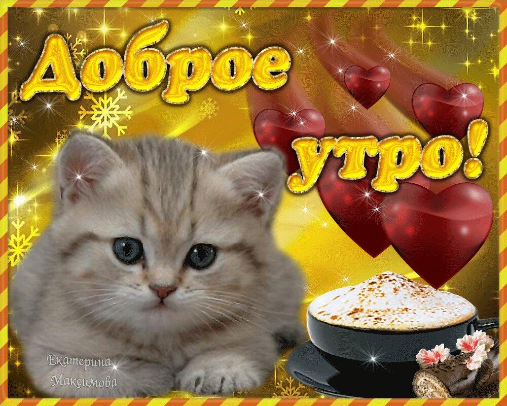 Прикольные картинки с котиками с добрым утром, фон для фото
