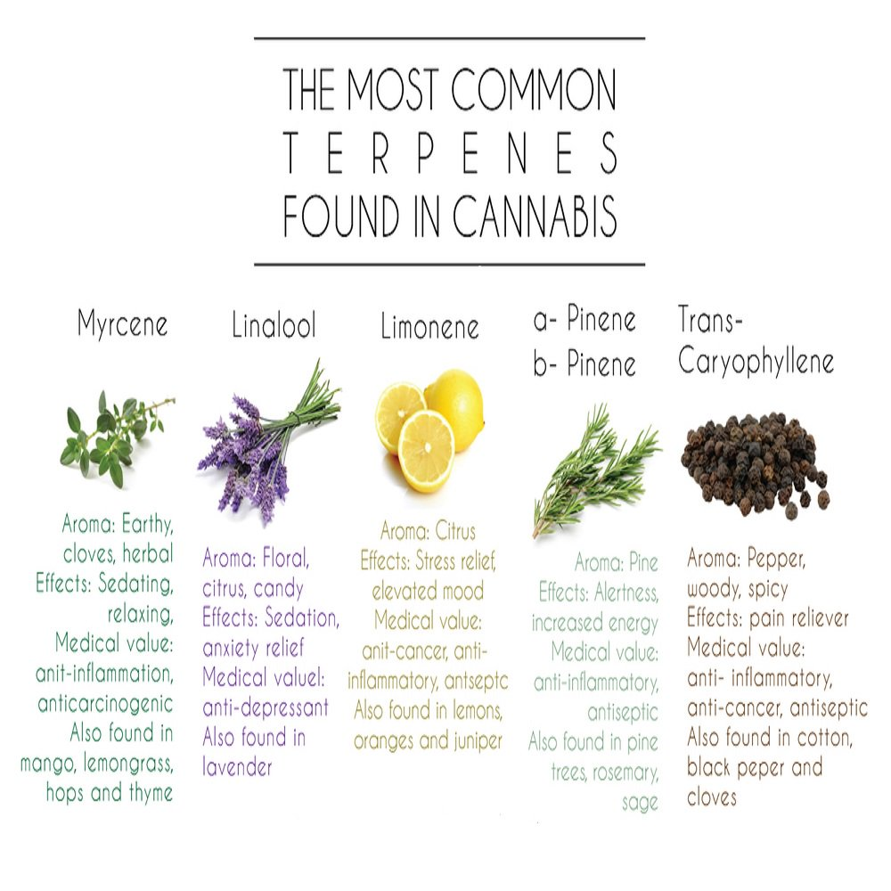Ever wonder about terpenes? Check out this handy chart. #terpenes #cannabis