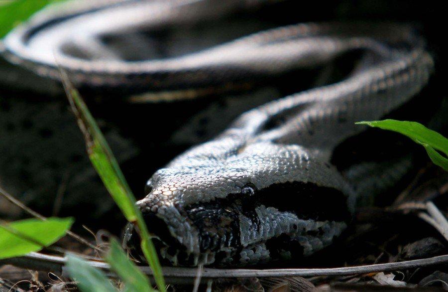 #6AM | 5.000 colombianos son mordidos por serpientes venenosas cada año  ---> #CaracolEsMás https://t.co/LBV3Z7vrpO