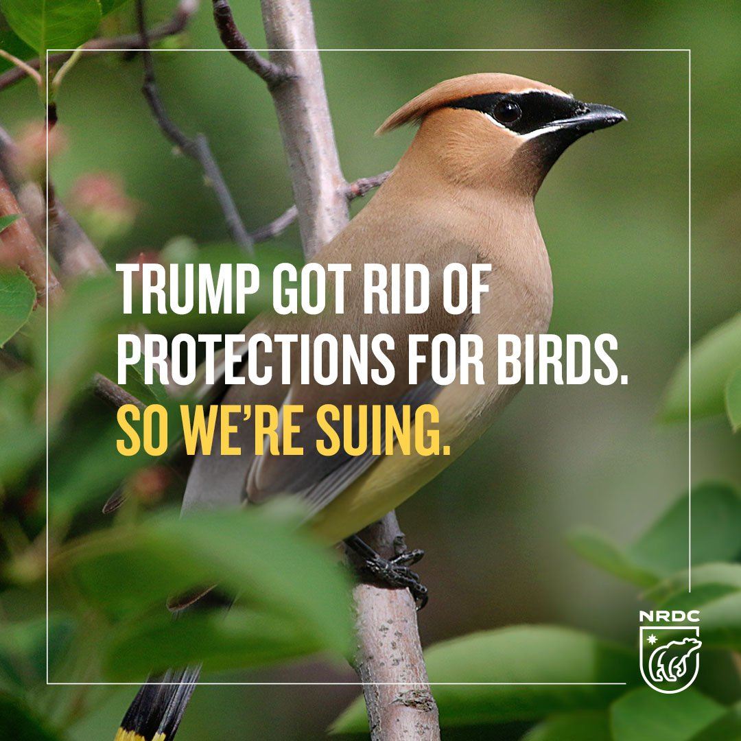 BREAKING: Today, NRDC and our partners filed a lawsuit to stop the Trump Administration and Interior Secretary Zinke from gutting the Migratory Bird Treaty Act: on.nrdc.org/2LsjHO7