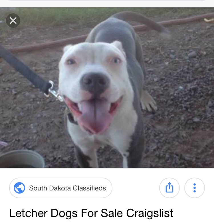 Craigslist South Dakota Pets For - Pets Wallpapers