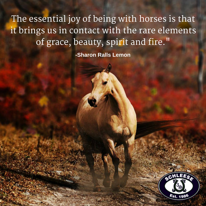 Schleese Saddlery On Twitter This Weeks Quote Is The Essential