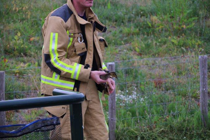 Eendjes in het gemaal bij de Parelduiker in Monster door de brandweer eruit gehaald https://t.co/uFB8LgnmcA