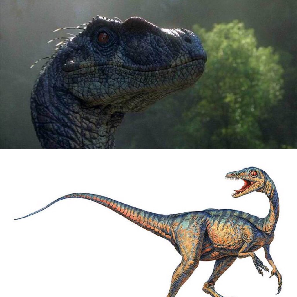 I'm drawing two new hybrids. One is a hybrid of a JP Velociraptor and a Troodon, the other is of a Allosaurus and a Nothosaurus. #JurassicPark #JurassicWorld #Dinosaur #Dinosaurs #DinoHybrid #DinosaurHybrid