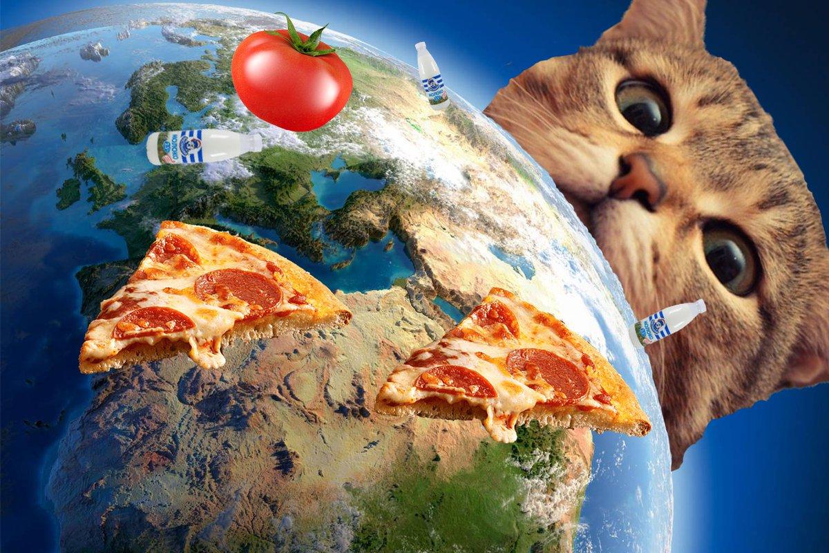 хватит коты захватили мир картинки доехать туда автобусе