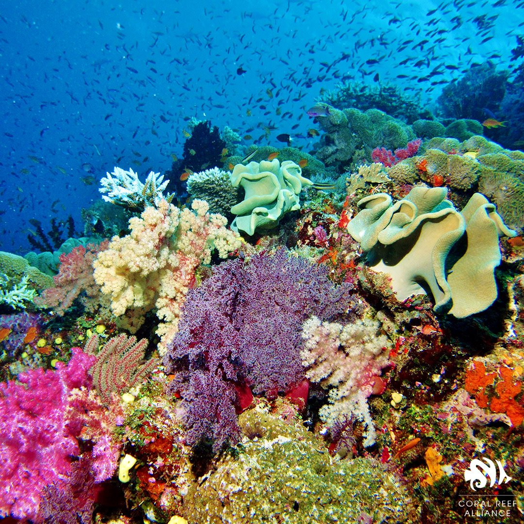 """Coral Reef Alliance On Twitter: """"Happy"""