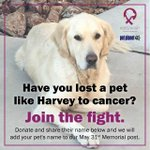 Image for the Tweet beginning: Every pet lost to cancer