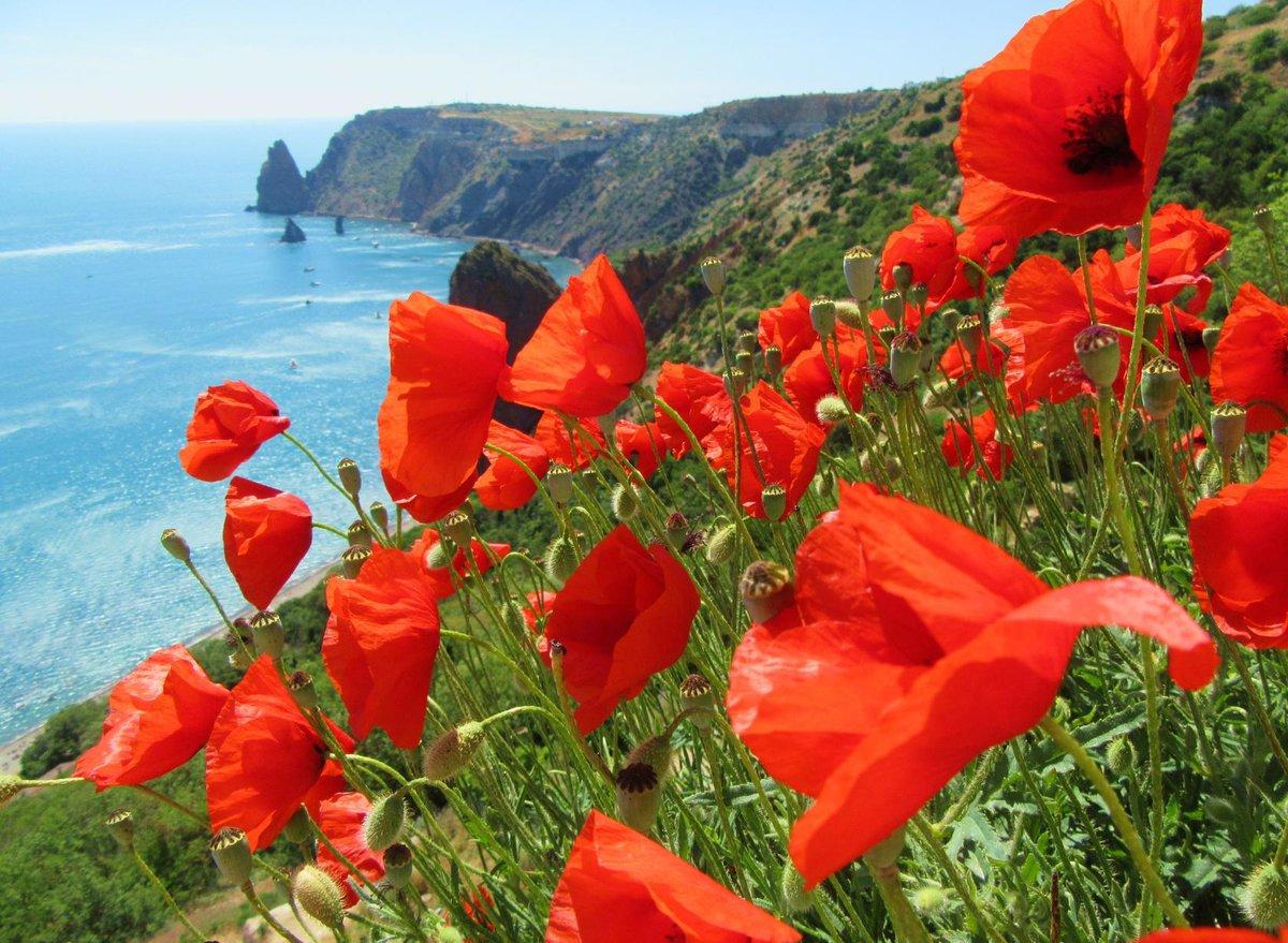 Доброе утро картинки природа лето рисунки море маки цветы