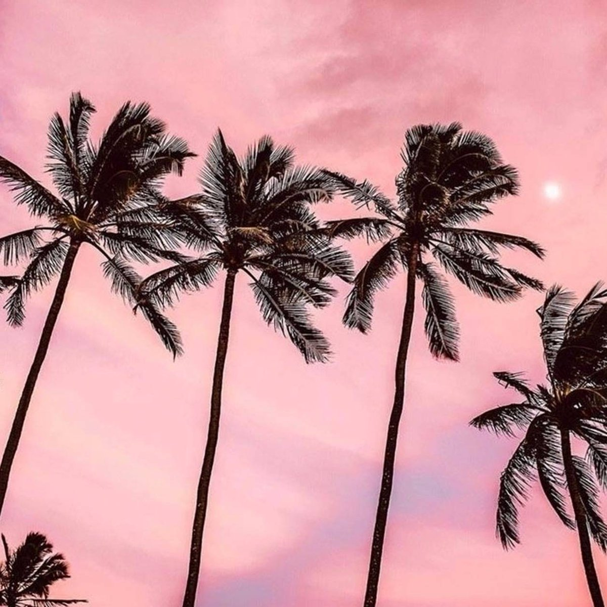 Image for HOLIDAY DREAMIN' 🌴😍💖💕 #holiday #bff https://t.co/mCVymS3dHb