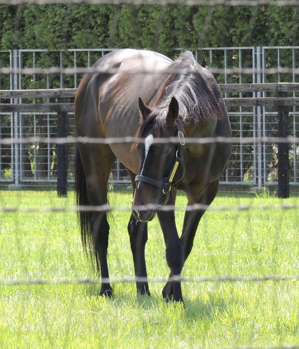 test ツイッターメディア - 社台SS 5月20日 キタサンブラック 馬房では会えなかったけれど放牧地で走ったり草を食んだり…産駒が楽しみ https://t.co/pXBt8LsYO8
