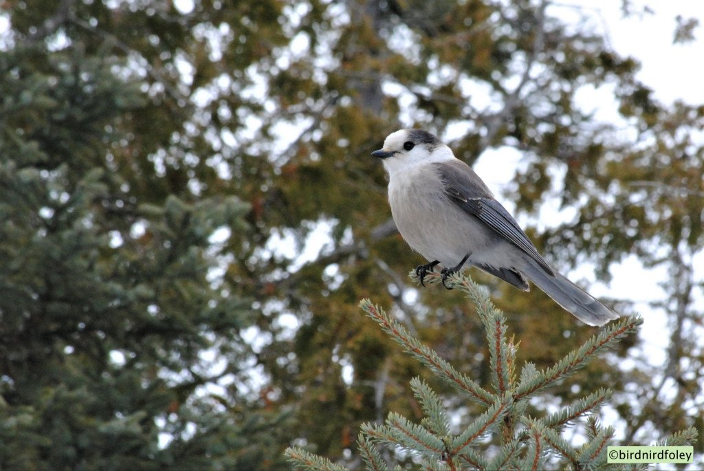 Love this! Oh Canada Jay!