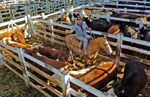 #Hacienda | Las #cotizaciones del #MercadodeLiniers del 18/01/19