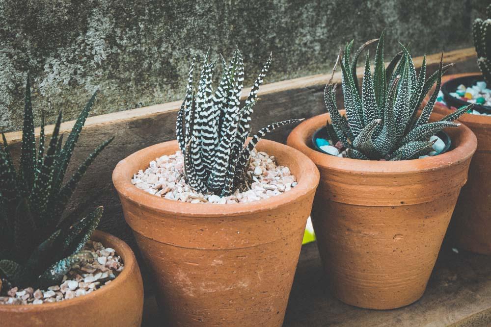 Come e quando #innaffiare le #piantegrasse in #estate? In questo #articolo trovi tutti i #consigli per la #coltivazione delle #succulente durante i mesi più #caldi https://t.co/3dTBaqV16F #gardening #verde https://t.co/1kwOHsufhL