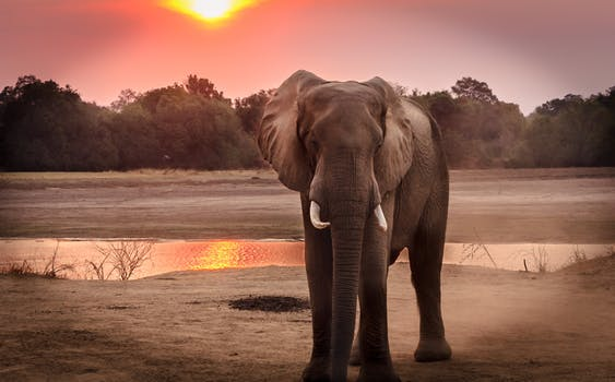 Thank you @AshleyTully2 for sharing this fantastic news!! @EPIUSEAmerica, @EPIUSELabs and our non-profit @elephantsrhinos are honored to have @SAP's support in these important efforts. #ERP #BestRun #DoingGood #EPIUSE