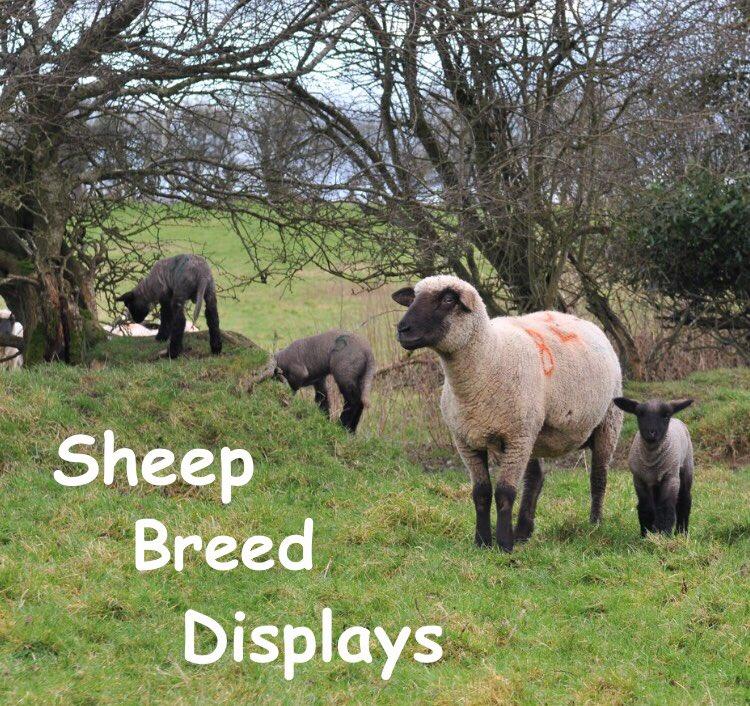 National Sheep Breeders Association of Ireland on Twitter