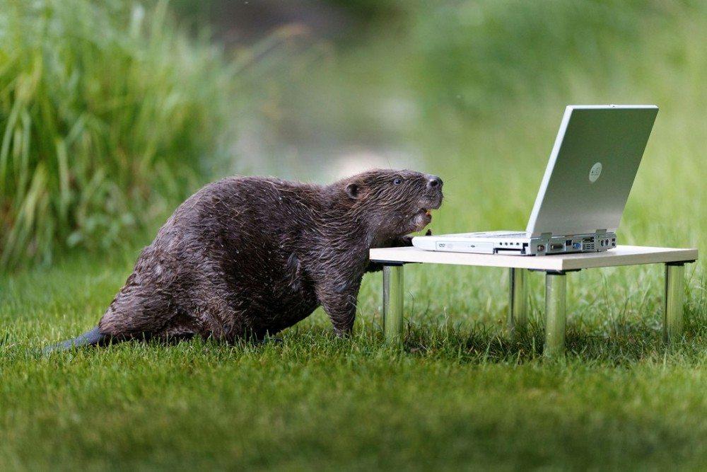 картинки компьютер и животные красивая окраска, причем