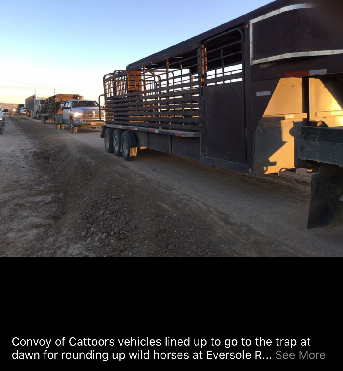 Chasing wildhorses with helicopters, penning them, and transporting them to holding facilities is...BIG BUSINESS, compliments of the American taxpayer. Here are the cowboys, all hot and bothered no doubt, as they prepare to abuse our protected wildhorses. This is NOT normal. <br>http://pic.twitter.com/axXXvcl2I8