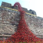 Image for the Tweet beginning: Weeping Window poppies at Carlisle