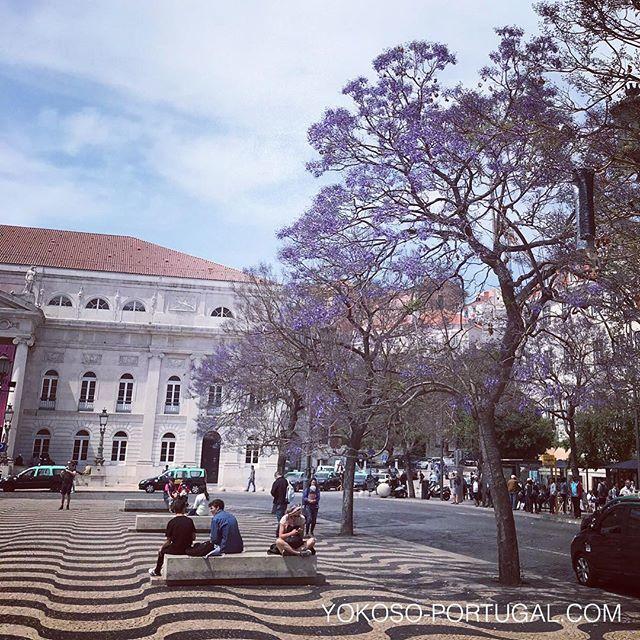 test ツイッターメディア - せっかく咲き始めたジャカランダですが、今日は久しぶりに雨の予報です。。 #ポルトガル #ジャカランダ https://t.co/nY4z8IA6IY