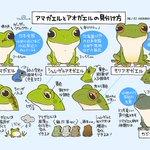 同じカエルでも全然違う!アマガエルとアオガエルの見分け方!