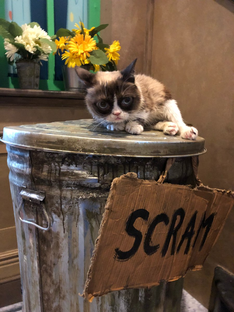 Grouchy furry friends stick together! @RealGrumpyCat stopped by @OscarTheGrouch's trash can at @licensingexpo this week! #LicensingExpo2018