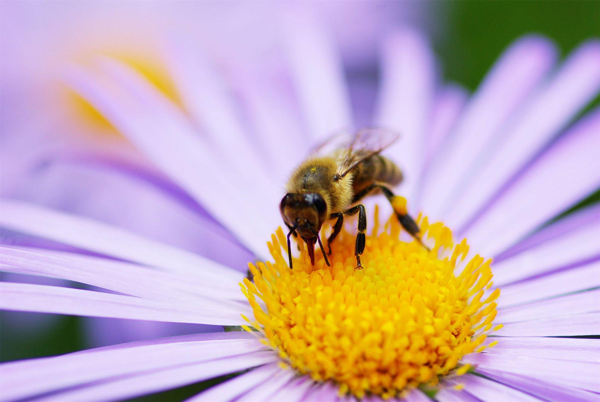 картинки пчела на цветочке другу приставкой