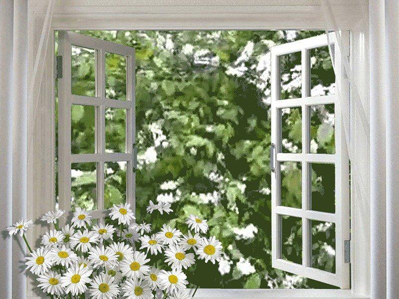Сауне, картинки с анимацией окна