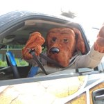 Image for the Tweet beginning: Even McGruff buckles up! Do