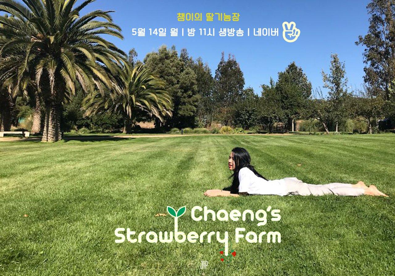 CHAEYOUNG's <STRAWBERRY FARM>  2018.05.14 11PM  #TWICE #트와이스 #CHAEYOUNG #채영 #딸기곤듀 #STRAWBERRYFARM https://t.co/jHKrcu22ZE