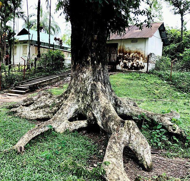 test Twitter Media - Old & Aged!  #tree #OldTree #Aged #Old #OldHouse #TeaEstate #Sylhet #vacation #Bangladesh #Asia #travel #travelblogger #travisscott #travelphotography #instagram #aged #travelog #travelblog https://t.co/vRslNRkPl4 https://t.co/JRMG0r5SPD
