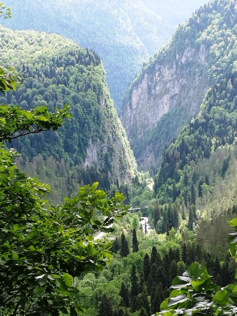 быстро картинки абхазия сегодня принадлежат сосновым, вечнозеленым