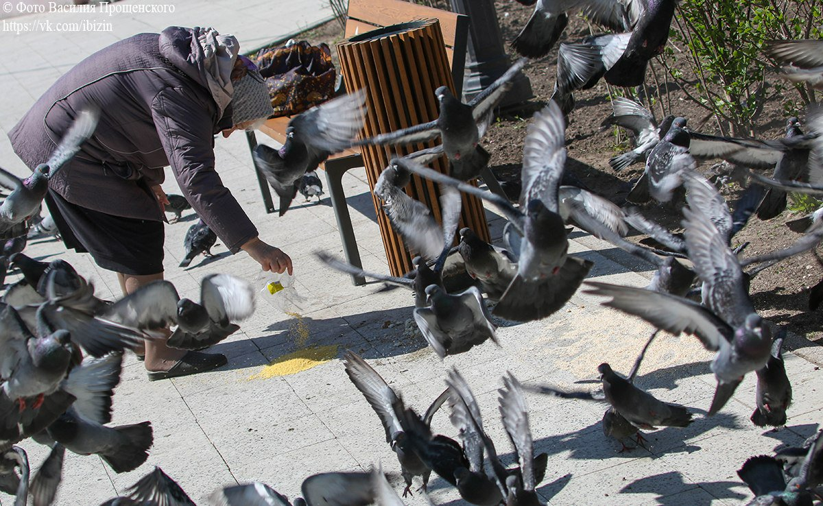 картинки старушка кормит голубей эти