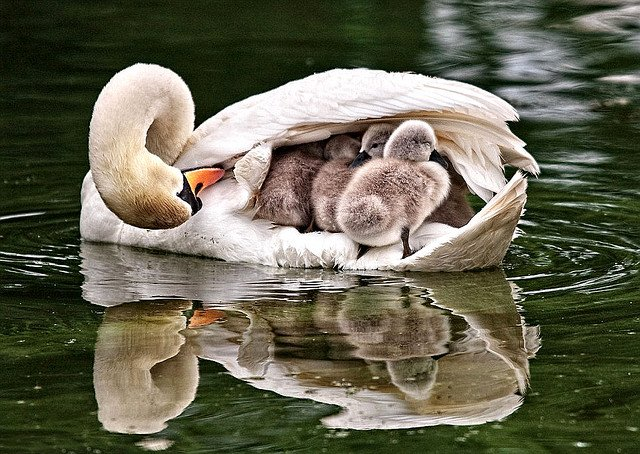 ... A mother puts you beneath her wings and keeps you there for life...