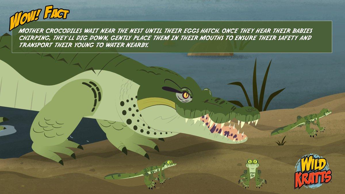 Gharial Crocodile Wild Kratts