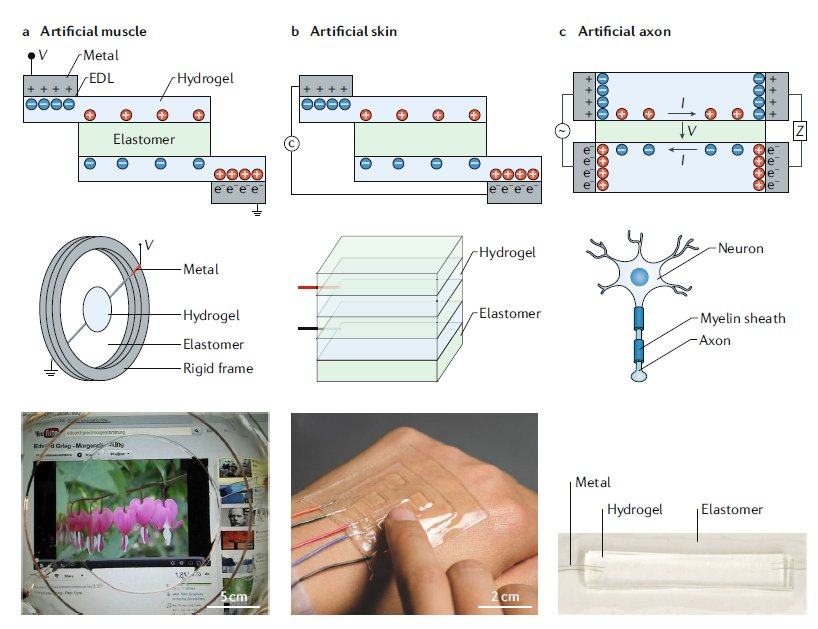Hydrogels can be used as ionic conductors for ionotronic devices, for example, artificial muscles, skin and axons. Canhui Yang and Zhigang Suo @hseas discuss first-generation hydrogel ionotronic devices @NatRevMater in our #softrobotics Focus Issue go.nature.com/2IllUsG