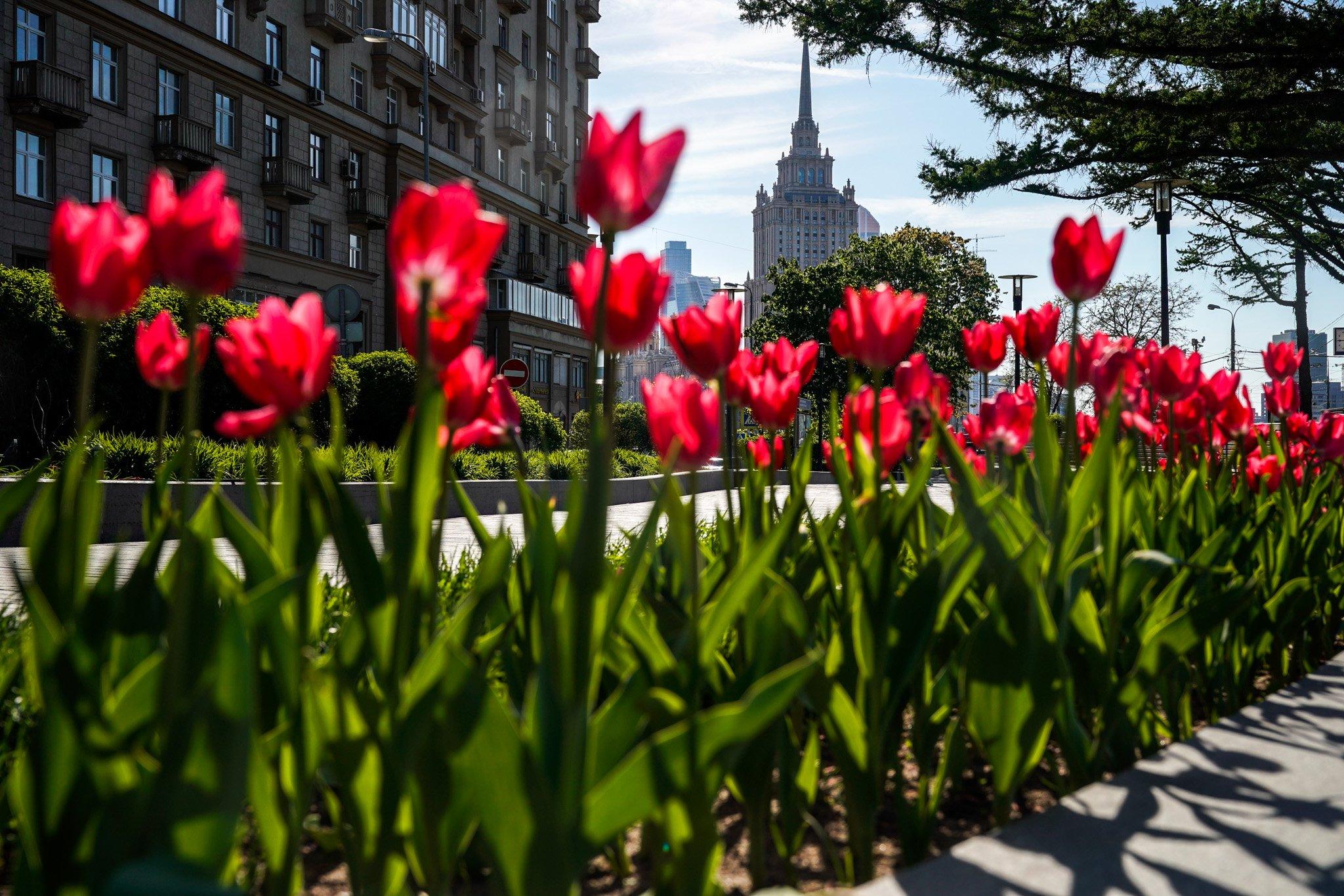 этих лучшие фото весны в москве способны удовлетворить запросы