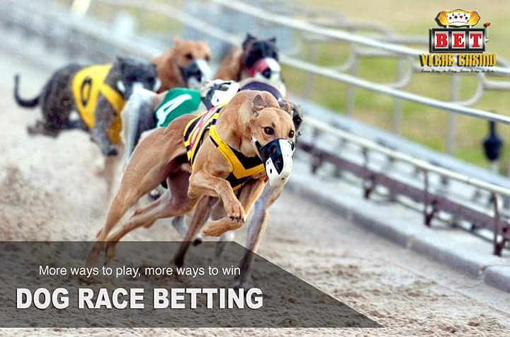 Casinos with dog race betting in las vegas high low binary options demo trading